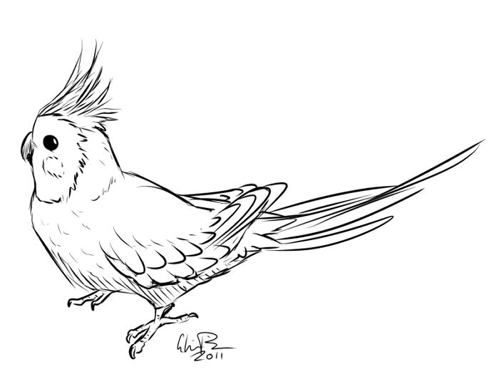 cockatiel bird coloring pages - photo#1