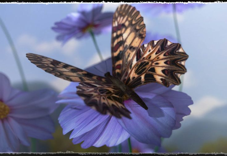 3D Insect Fauna: Flutter of Butterflies by ShaaraMuse3D & Frequency. // #insect #insects #butterfly #butterflies #creature #poser #nature #render #frequency3d #shaaramuse3d #renderosity