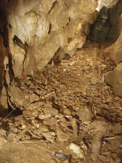 Pestera cu Oase signifie «Grotte aux ossements» en roumain. Ce lit d'ossement laissé par un ours des cavernes est attenant à la «salle d la mandibule», où a été trouvé Oase 1. Le point rouge indique où a été trouvé Oase 2OASE 2, le crâne d'un adoslescent sapiens, qui lui aussi portait des traits néandertaliens. (C:Richards et al. 10.1073/pnas.0711063105.)