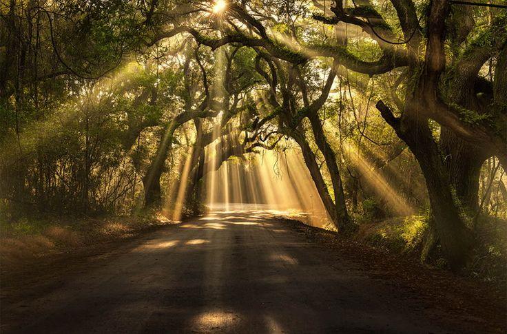 Las fotografías de árboles más hermosas del mundo 23