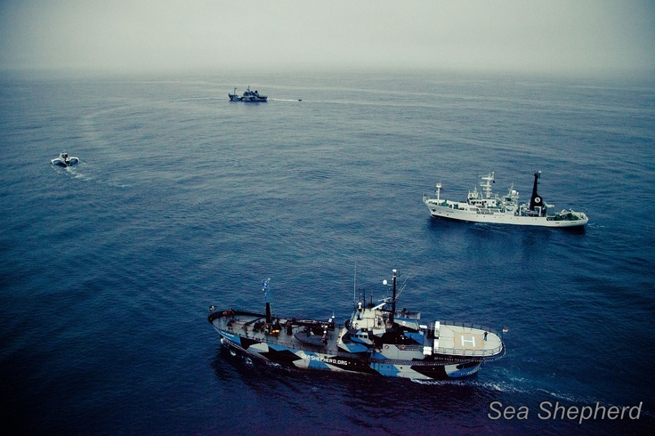 The Four Sea Shepherd ships conducting manoeuvres. What an amazing photo.