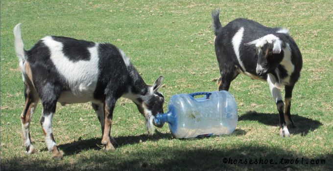 DIY toys for goats and horses
