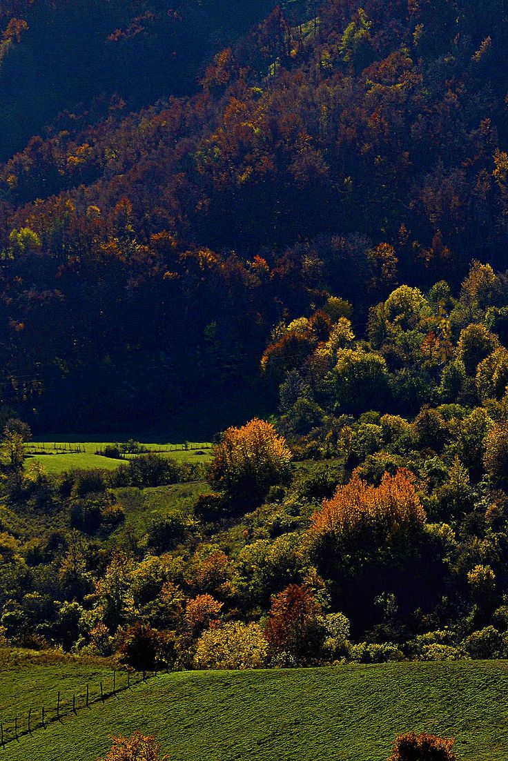 High Val Parma Forest  -  The Lagoni Toward Cirone pass