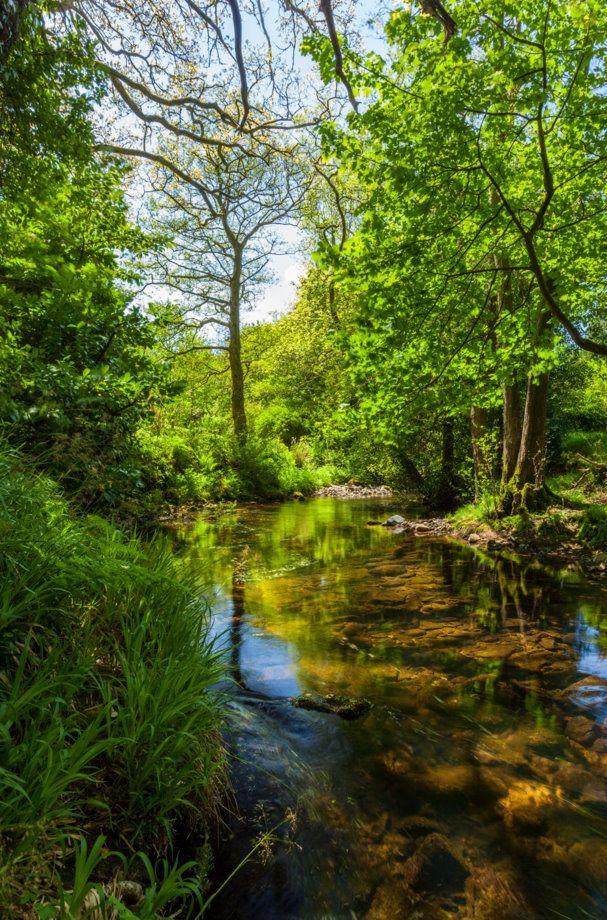 Sticklepath | Dartmoor | Devon - Rivers and Trees - Landscape Photo Picture Image - Neville Stanikk Photography