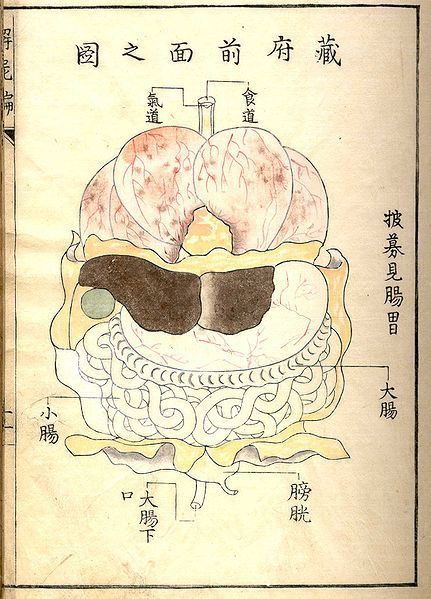 Kaishi Hen, an 18th Century Japanese anatomical atlas | The Public Domain Review #maps #anatomy: Century Japan, Illustrations Posters Patterns, Anatomical Atlas, Japanese Illustrations, Grafik Illustrations, Kaishi Hens, 18Th Century, Japanese Anatomical, Japan Anatomical
