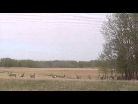 Deer on the Farm www.hovenfarms.com