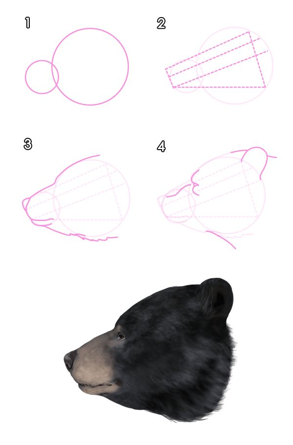 How To Draw Animals Bears And Pandas And Their Anatomy Art