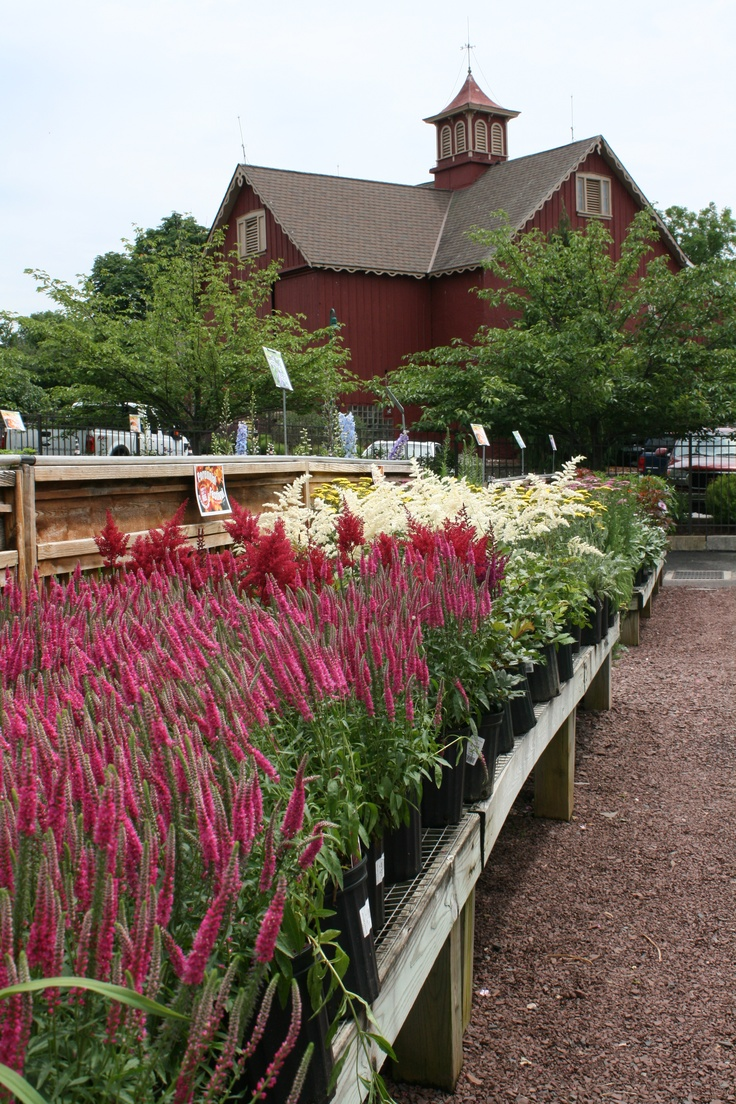 Customer Testimonial: Bucks Country Gardens: One Of My Top 2 Favorite Local  Garden Centers