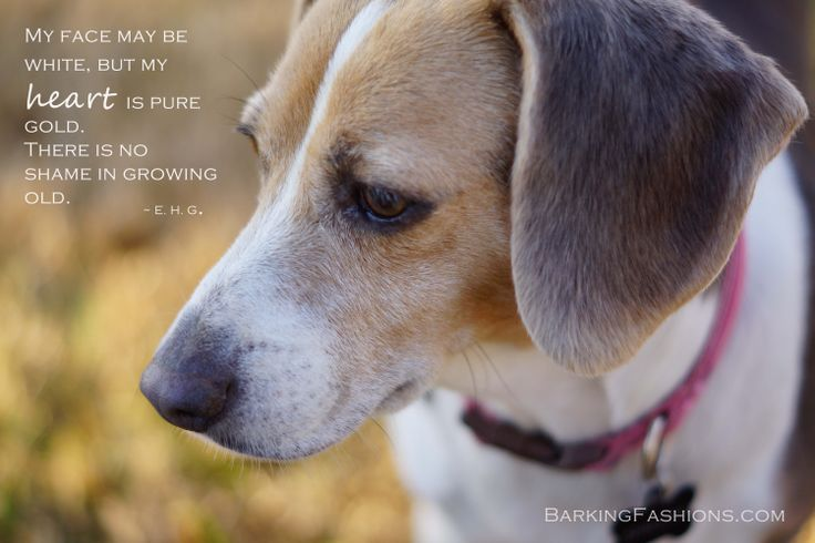 Barkingfashions Com Custom Made Clothes For Dogs Senior Dog