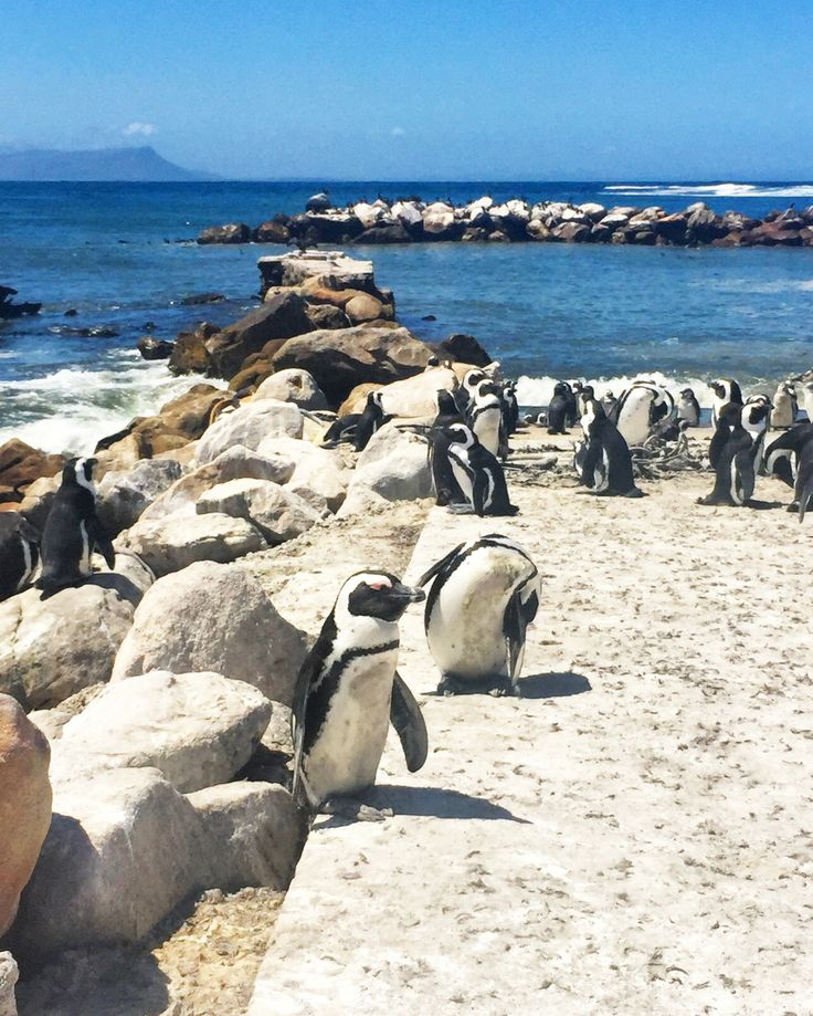 Betty's Bay - South Africa