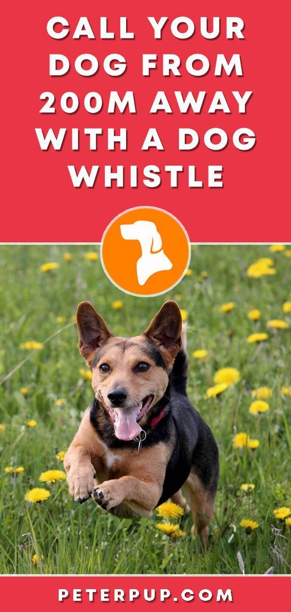 A Quick Guide On How To Use A Dog Whistle | Dogs | Dog whistle, Dog