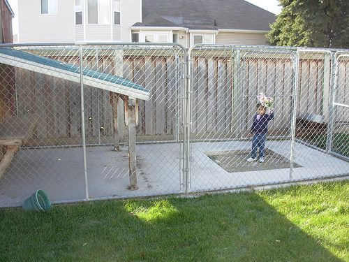 Cheap Fence Ideas This Picture Shows The Patio And Cover