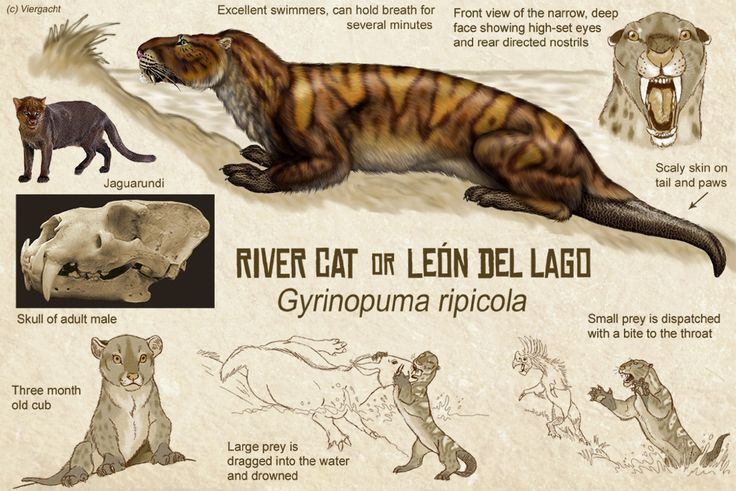 River Cat, or Leon del Lago by Viergacht, an exercise in speculative evolution