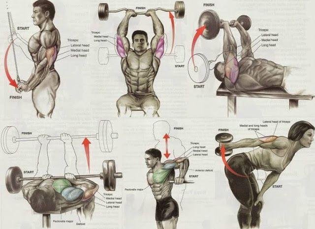 Best 25+ Gym workout chart ideas on Pinterest | Gym ...