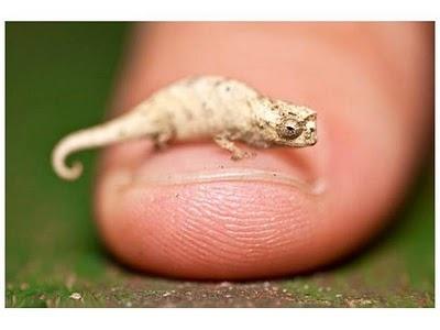 ¿Cuáles son los animales más pequeños del mundo? #cute #animales