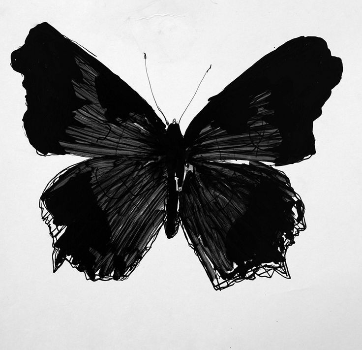 Image result for butterfly drawing black