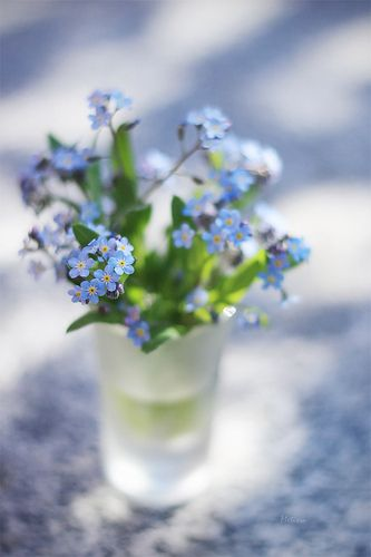 Maybe my favourite flower, the forget-me-not :)
