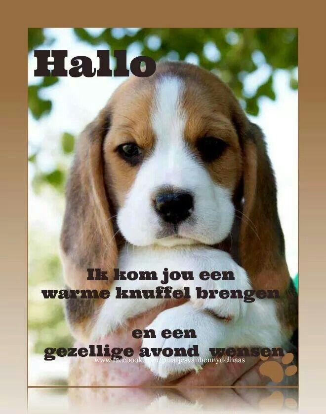 Good Morning Everyone In Dutch : Fijne dag avond wensen pinterest