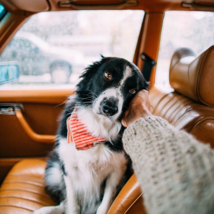 17 Things All Border Collie Owners Must Never Forget - Give me your trust. Just like I trust you, I need you to trust me, too.