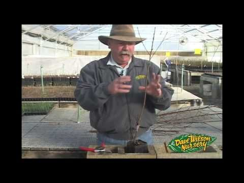 Grafting Fruit Trees, 3 different methods - a detailed video