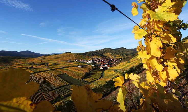In love with this region:) Alsace je t'aime! :)