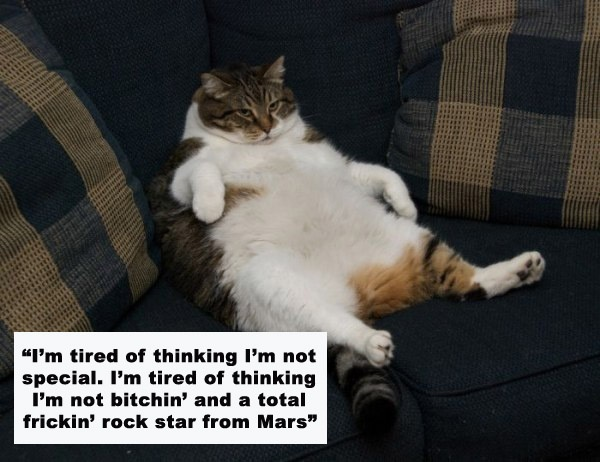 Charlie Sheen Quotes + Cats