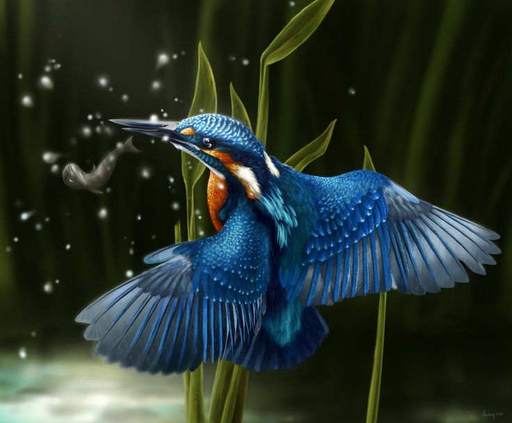 https://flic.kr/p/Essh8x   kingfisher