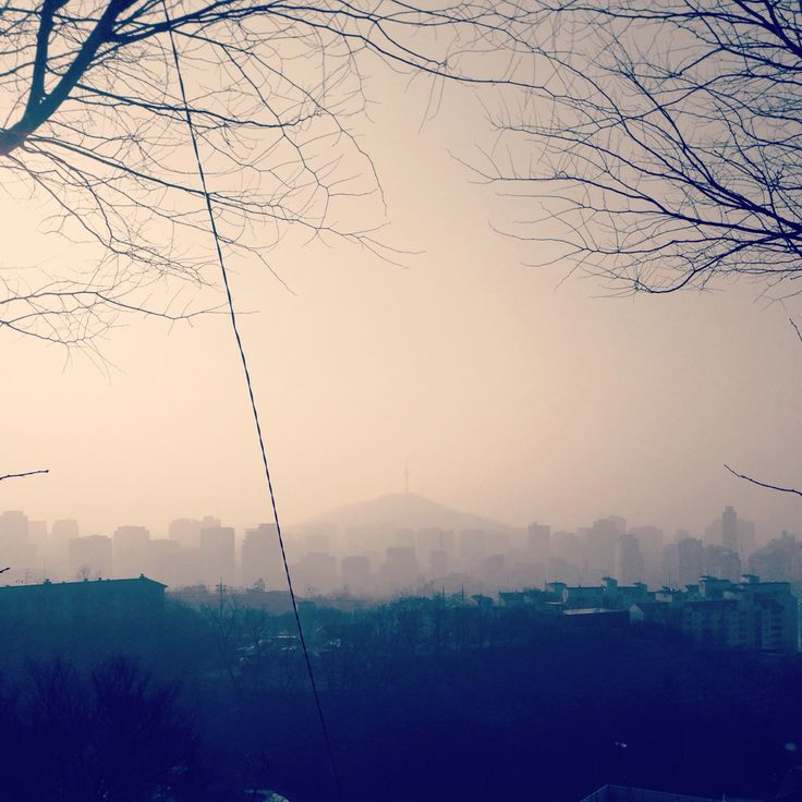 #misty #morning #winter #air #forest