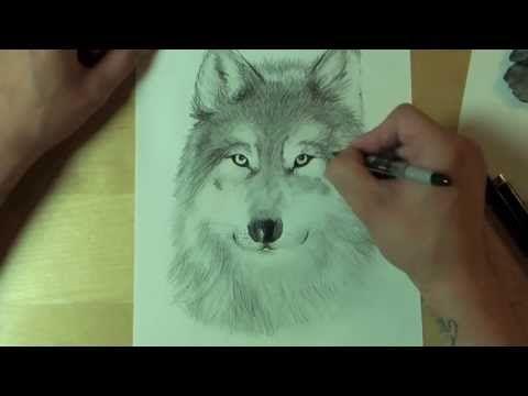 ▶ Wie zeichnet man einen WOLF ?! How to draw - YouTube