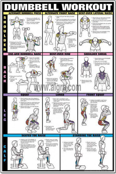 Dumbbell Workout Chart