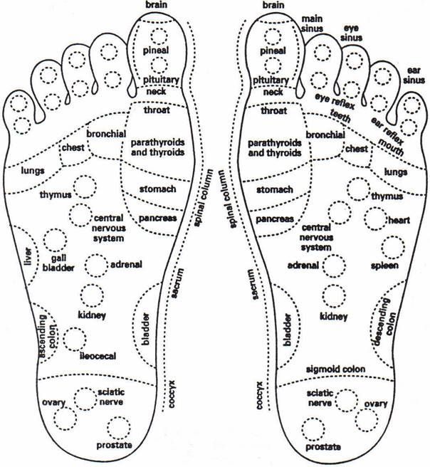 best 25  foot reflexology ideas on pinterest