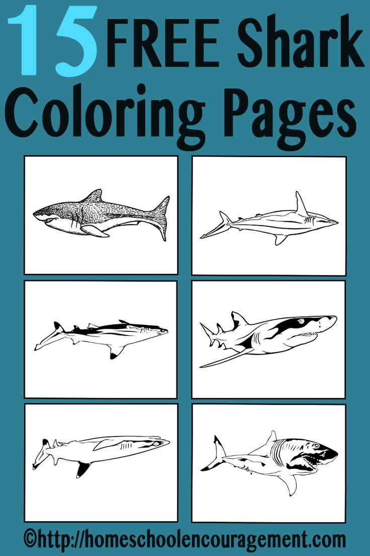 Free coloring pages sharks