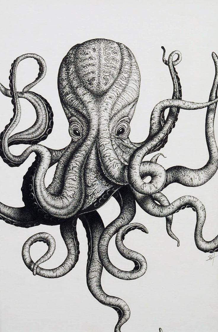 Gallery For gt Vintage Octopus Drawing