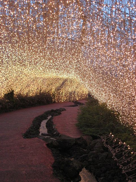 Fairy Lights at the Aso Farm Land in Japan