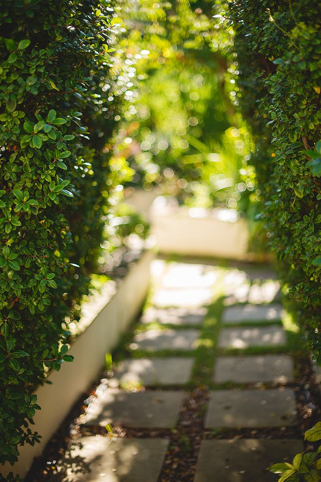 A winding path to our secret garden at The Last Word Constantia. Shhh....