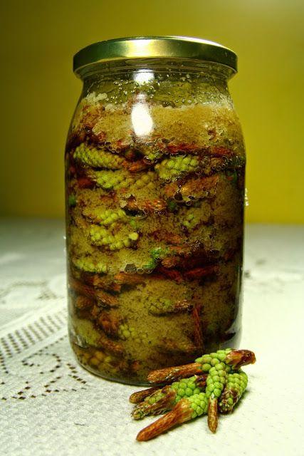 Maj to okres zbioru młodych pędów kwiatowych sosny i pączków sosny, które są źródłem olejków eterycznych, witamin i garbników warto więc zbierać te dobrodziejstwa natury i sporządzić z nich syrop, nalewkę, które będą pomocne w leczeniu kaszlu i bólu gardła.  https://www.facebook.com/zastosowanieziol/
