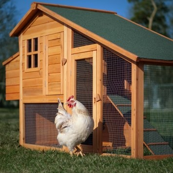 Affordable chicken coop!Fresh Eggs, Chicken Coops, Farms, Urban Chicken, Gardens, Poultry House, Chicken House, Chicken Coupe, Deluxe Chicken
