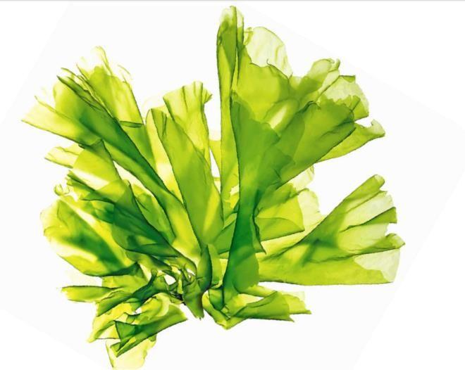 Bízzon Ön is az algák különleges varázserejében!  http://www.thalion.hu/