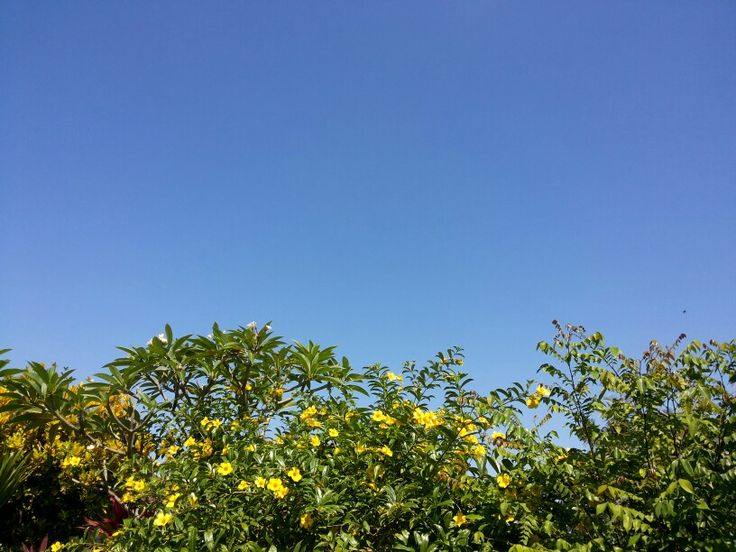 Sky Garden (home sweet home)