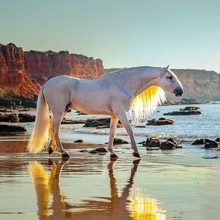 BELIEBTE PFERDERASSEN IN DER WELT   – The Ocean & Beach