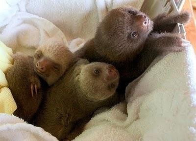 Sloth...