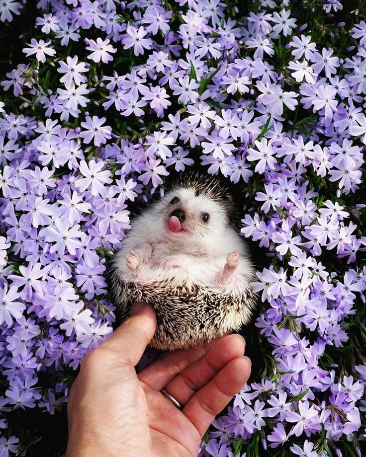 How cute is this?! #foundonweheartit #cuteanimals #cuteporcupine #puppylove #cuteanimals