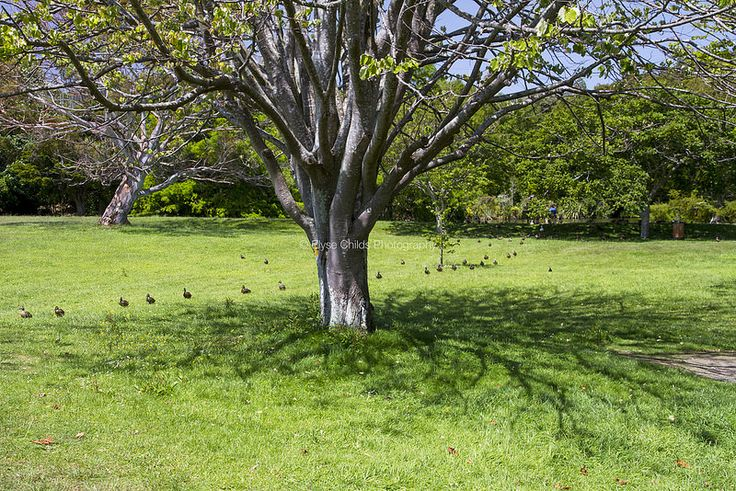 Ducks and tree shadows at Te Haukeretu Park, Upper Hutt | © Elyse Childs Photography