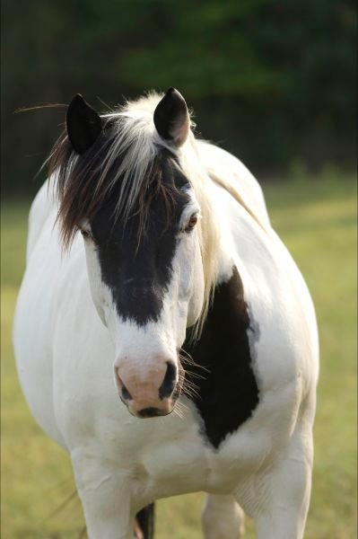 It's like this horse's markings are the opposite!