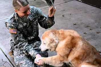 This Elderly Dog Cried When She Welcomed Her Best Friend Home From The Army