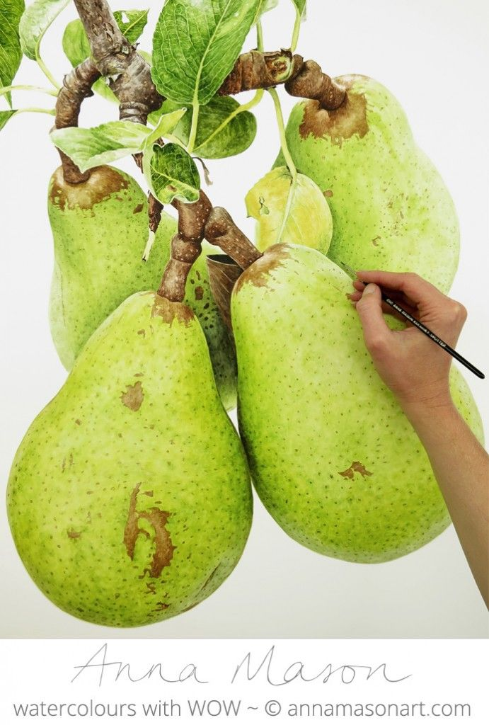 Pears all lovely and round and full now. Ready for picking?