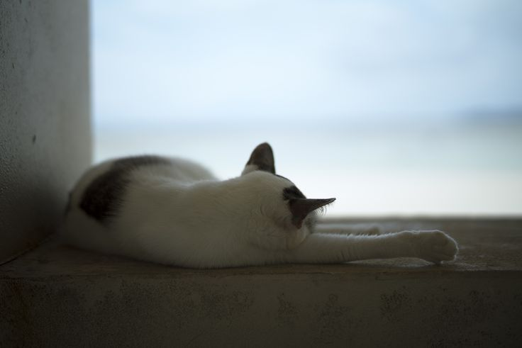 phrase. | Cat#6