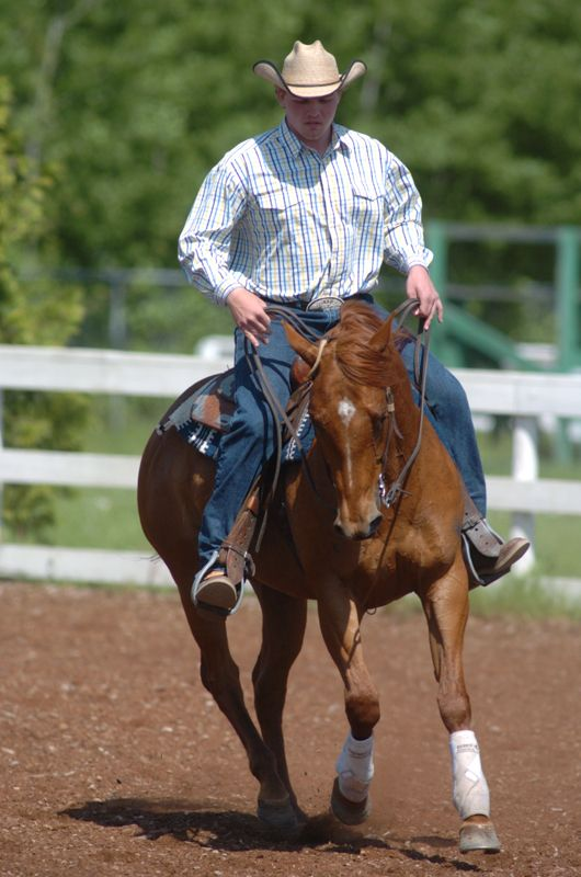 lori k. warren, fit horse, horse fitness, horse conditioning, horse schooling, equine conditioning, equine schooling, equine fitness, fit equine, equine interval, equine gymnastics, horse gymnastics, horse strength, equine strength