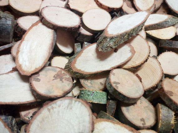 Conjunto de 50 pequeñas rebanadas de árboles mixtos en