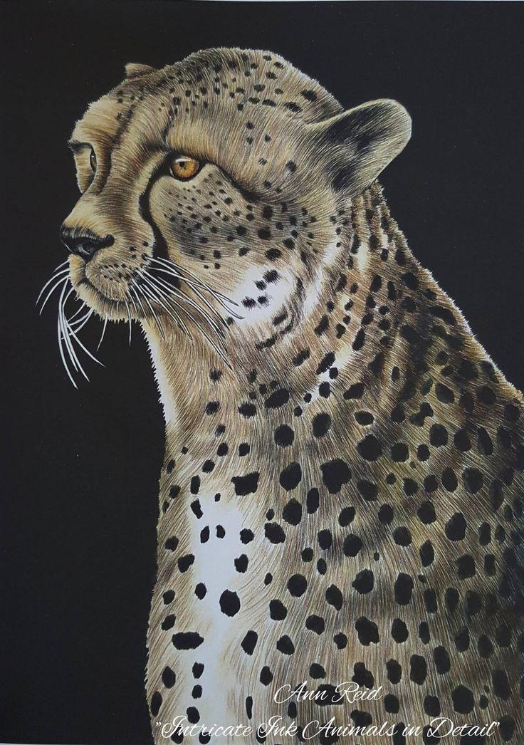 Cheetah By Ann Fisher Reid